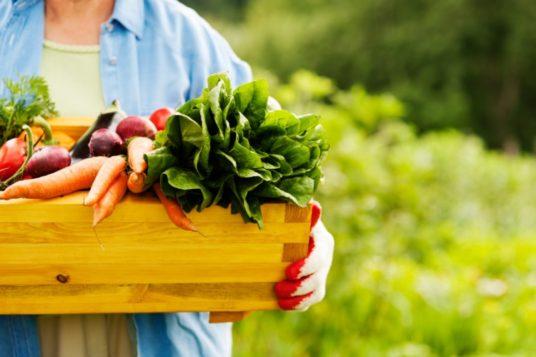 prodotti bio dieta vegetariana non è moda passeggera